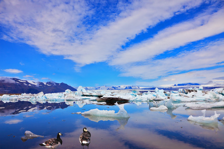 drifting ice: Cirrus cloud, drifting ice floes and flying geese are reflected in an ocean lagoon. Jökulsárlón Glacial Lagoon in Iceland Stock Photo