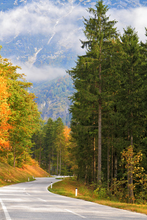 yellowing: Road in the mountains of beginners yellowing pines and spruces. Beautiful autumn day in the Austrian Alps