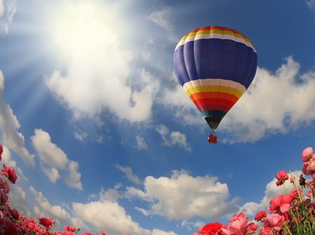 Field with blooming pink buttercups. Flying over flowers huge multicolored balloon. Spring in the south. Photo taken by lens Fisheye photo
