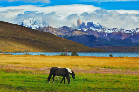 animal park: Impressive landscape in the national park Torres del Paine, Chile. Lake Laguna Azul in the mountains. On the shore of Lake grazing horses Stock Photo