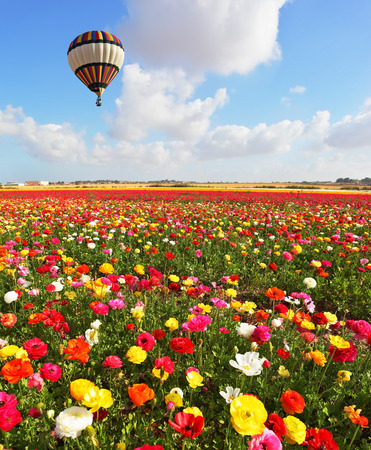 A lot of lovely blooming flowers and shining clouds. Over the blossoming field of flying a balloon photo