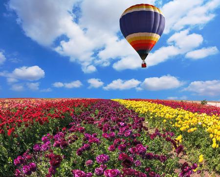 vómito: En el campo en el cielo volando gran globo. Campos rurales de varios colores elegantes con flores - ranúnculo - rojo y amarillo