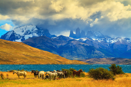 azul: Magic light of sunset. Herd of mustangs on the shore of Laguna Azul. Rocks Torres del Paine visible among the clouds