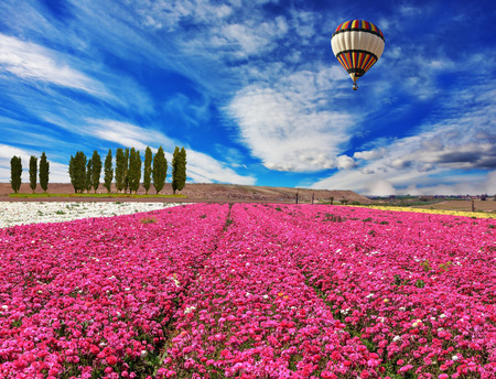 Windy spring day. A field of the blossoming buttercups of gentle lilac color. Huge balloon flies over a field photo