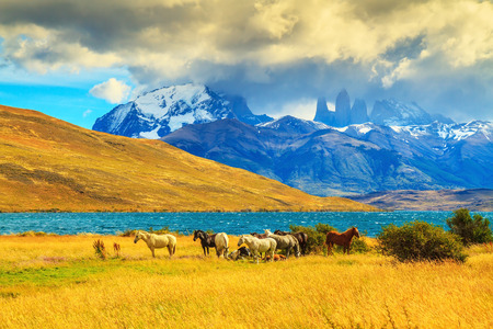 azul: Magic light of sunset.  Rocks Torres del Paine visible among the clouds. Herd of mustangs on the shore of Laguna Azul