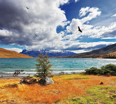 gale: The gale on Lake Laguna Azul. High in the sky flying a huge Andean condor. In the distance the mountains with snow-capped Stock Photo