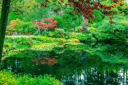 In small pond, overgrown with lilies, reflected trees and flowers. Delightful landscaped and floral park Butchart Gardens on Vancouver Island