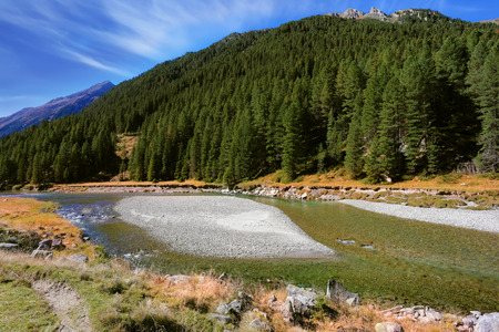 pine creek: Autumn creek shallow. Austrian Alps. The narrow stream flows between fields and pine forests