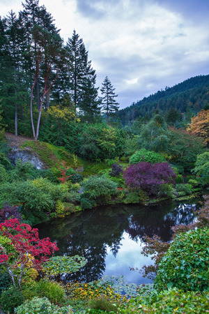 garden of eden: In a small pond, overgrown with lilies, reflected sky. Delightful landscaped and floral park Butchart Gardens on Vancouver Island