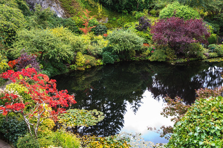 In pond, overgrown with lilies, reflected trees and sky. Delightful landscaped and floral park Butchart Gardens on Vancouver Island photo