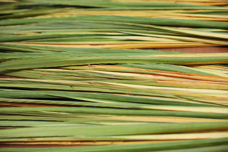 lulav: Counter holiday bazaar on the eve of Sukkoth. The palm lulav