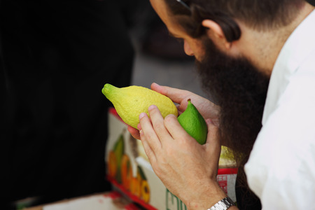 sukkoth: Religious Jew chooses ritual plant - citron- on the bazaar on the eve of Sukkoth. September 22, 2010, Sukkoth market, Bene Brak, Israel