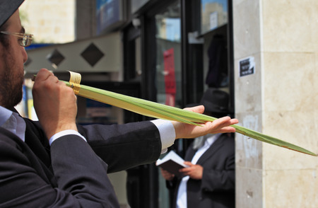 brak: Bnei Brak - September 22: An orthodox Jew chooses ritual plant Lula before Sukkot September 22, 2010 in Bnei Brak, Israel Editorial