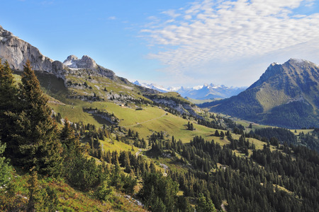 swiss alps: Gorgeous weather in the Swiss Alps. Green meadows and pine forests on the mountain slopes