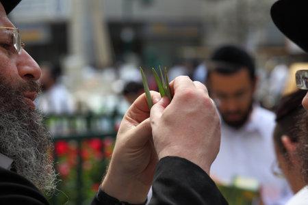 brak: Bnei Brak - September 22: An old orthodox Jew chooses ritual plant Lula before Sukkot September 22, 2010 in Bnei Brak, Israel