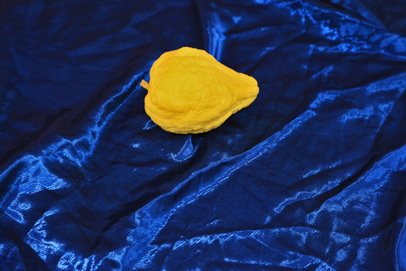 etrog: Jewish holiday of Sukkot. Ritual fruit - citron on blue velvet