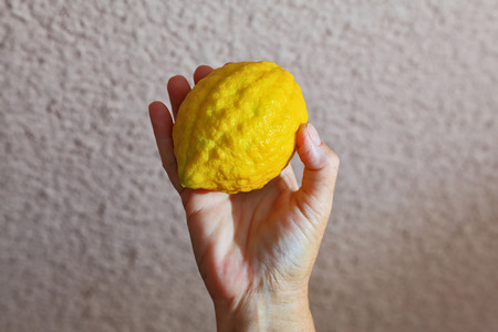 sukkoth: Autumn Jewish holiday - Sukkot. Ritual yellow citrus - etrog in a female hand Stock Photo