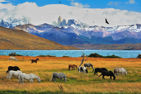 on lake: Lake Laguna Azul in the mountains. On the shore of Laguna Azul grazing horses. Magical landscape in the national park Torres del Paine, Chile Stock Photo