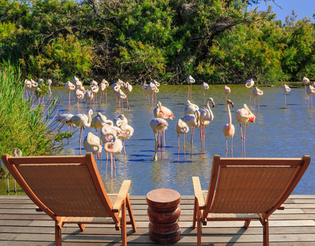 lounge chairs: Park Camargue in delta of Rhone. Comfortable lounge chairs on wooden platform for rest and  birdwatching. Flock of pink flamingos in the shallow lake Stock Photo