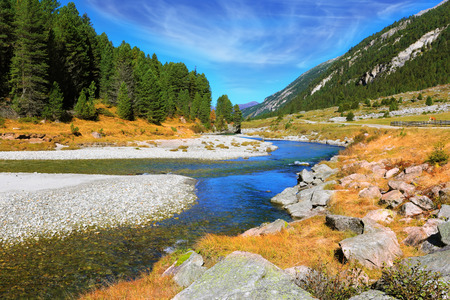 pine creek: Headwaters Krimml waterfalls. Autumn creek shallow. Austrian Alps. The narrow stream flows between fields and pine forests