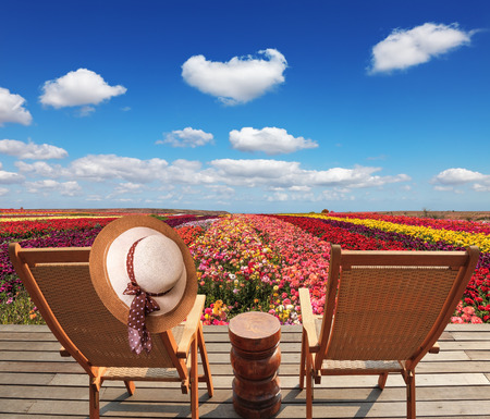 lounges: Two chaise lounges for rest stand on a scaffold at a picturesque flower field. On one chaise lounge the elegant straw hat hangs. Spring buttercups grow multi-colored strips