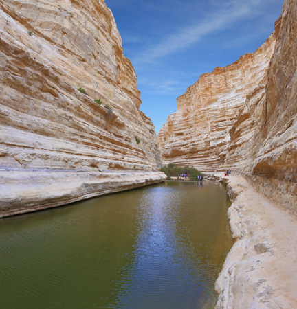 canyon negev: Unique canyon in the desert. Picturesque canyon Ein-Avdat in the Negev desert. Clean cold water in the creek canyon. Sandstone walls apart, like butterfly wings