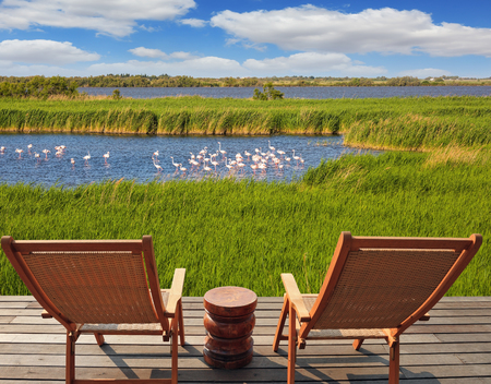 birdwatching: Park Camargue in delta of Rhone.  Flock of pink flamingos in the shallow lake. Comfortable lounge chairs on wooden platform for rest and  birdwatching Stock Photo