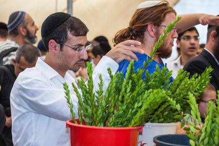 sukkoth festival: JERUSALEM, ISRAEL - OKTOBER 8, 2014:  Young religious man in black skullcap carefully chooses ritual  myrtle - adas. Traditional market before the holiday of Sukkot
