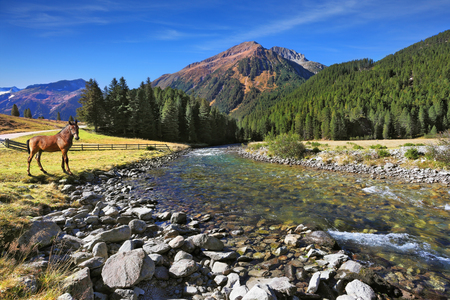 seething: Idyllic landscape. National park Krimml falls in Austria. Upper courses of falls - rather narrow fast seething small river among green mountain meadows. On the shore of the mountain river stands the village horse Stock Photo