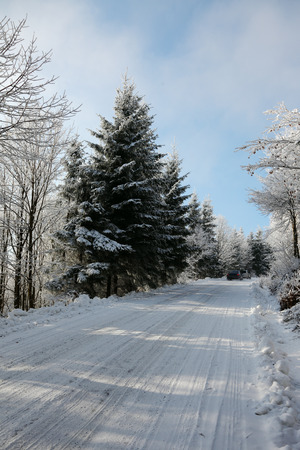ski traces: Winter road to wood. The trees covered with snow and ski traces on snow
