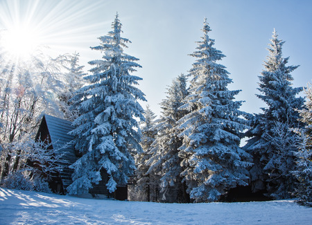 clearing: Ski clearing in snowy forest illuminated pink sunrise. Perfect New Years morning in the Czech Tatras Stock Photo