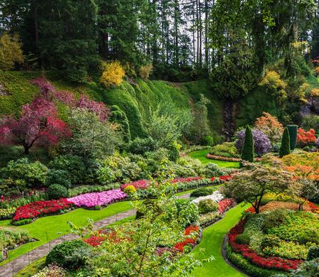 jardines con flores: Jardines Butchart - increíblemente hermoso jardines de la Isla de Vancouver, Canadá. Jardín Hundido - más bella parte del complejo del parque. macizos de flores de flores brillantes y pista para los turistas