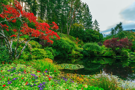 garden of eden: Delightful landscaped and floral park Butchart Gardens on Vancouver Island. In a small pond, overgrown with lilies, reflected trees and flowers Stock Photo