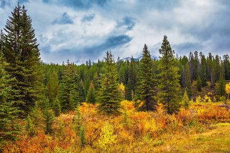 indian summer: Fine Indian summer in Banff National Park. Yellow and orange herbs and evergreen fir-trees. Canada, the Rocky Mountains Stock Photo