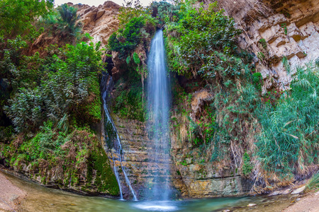 gedi: Falls Shulamit falls into a shallow pond with emerald water. Ein Gedi - Nature Reserve and National Park, Israel