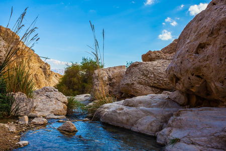 ein: Wonderful Middle Eastern landscape. The stream of cold pure water flows through the beautiful gorge Ein Gedi, Israel Stock Photo