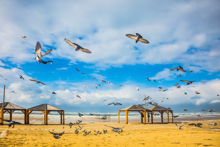 noisy: The windy January day in the Mediterranean. Flock of pigeons noisy flying away from the sandy beach