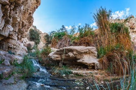 ein: Typical landscape of the Middle East. The stream of cold pure water flows through the beautiful gorge Ein Gedi, Israel