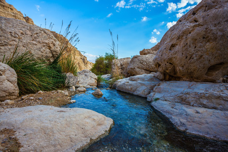 nature reserves of israel: Wonderful Middle Eastern landscape. The stream of cold pure water flows through the beautiful gorge Ein Gedi, Israel Stock Photo
