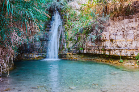 nature reserves of israel: Walk in the national park Ein Gedi, Israel. Beautiful waterfall and a small scenic lake with clear water.