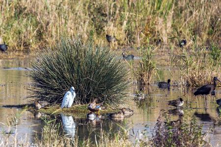 wintering: Various types of water birds wintering at Lake Hula Stock Photo