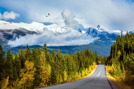 rockies: Canadian Rockies. Fine September day. The highway passes among mountains and the turned yellow woods