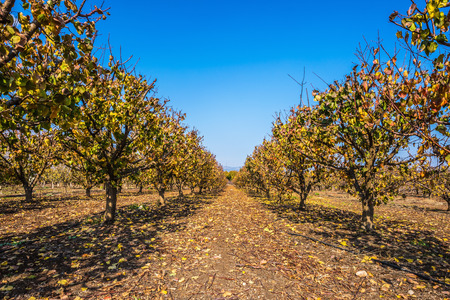 surrounds: Straight rows of fruit trees surrounds Lake Hula
