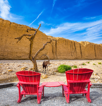 the convenient: Two convenient red chaise lounges connected by small table stand for tourists. Mountain goat grazing in the dry tree. Stock Photo