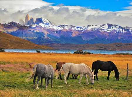 horse: Lake Laguna Azul in the mountains. On the shore of Lake grazing horses. Impressive landscape in the national park Torres del Paine, Chile Stock Photo