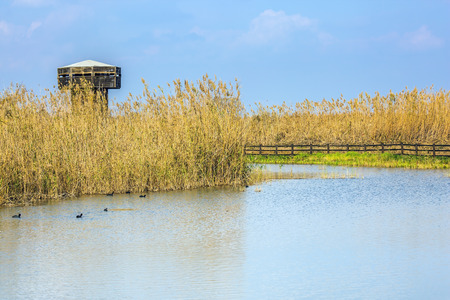 wintering: Wooden round tower for bird watching. Hula Nature Reserve, Israel, December. Lake Hula is a wintering place for migratory birds Stock Photo