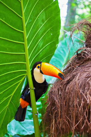 large bird: Large bird with bright plumage and a huge yellow beak. Toco toucan in the reserve of exotic tropical birds Stock Photo