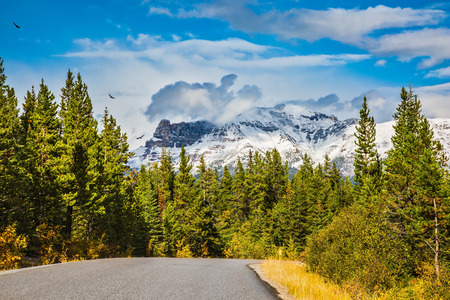 rockies: Canadian Rockies in beautiful autumn day. The road goes among the mountains and forests yellowed