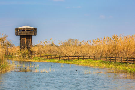 wintering: Wooden tower for bird watching. Hula Nature Reserve, Israel, December. Lake Hula is wintering place for migratory birds