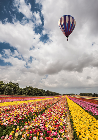 kibbutz: Great multi-colored balloon flies over flower field. Quiet sunny spring day. Flowers on the field planted by color stripes. Flower kibbutz near Gaza Strip Stock Photo